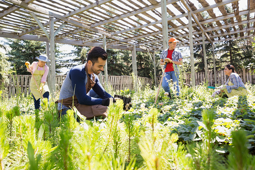 plant nursery workers