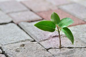 Plant growing in sidewalk crack